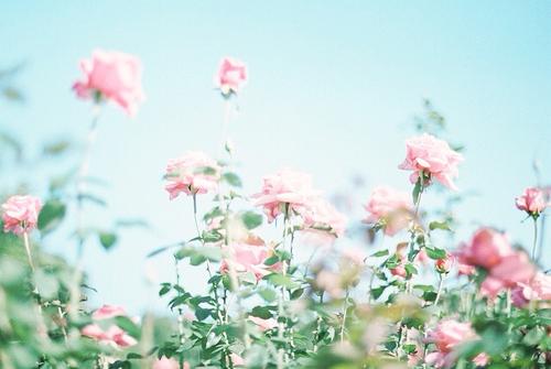 beautiful-blue-sky-cute-flower-Favim.com-2682443